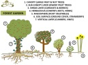 7 layer food forest