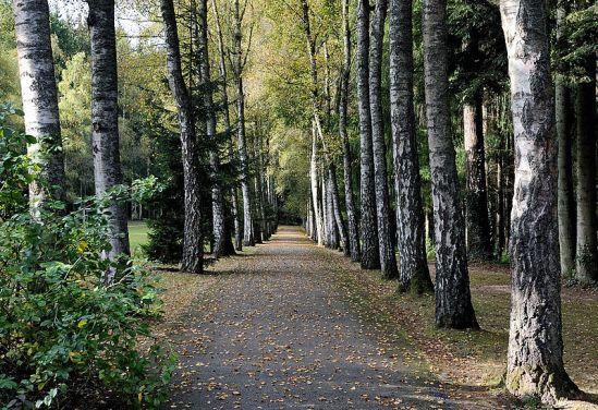 Luxembourg Birch Walk