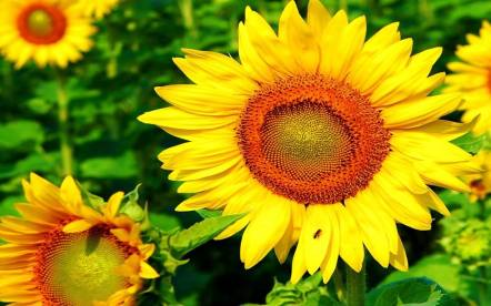 Sunflowers. happiness, brings friends, cleans up radiation along with hemp and mushrooms