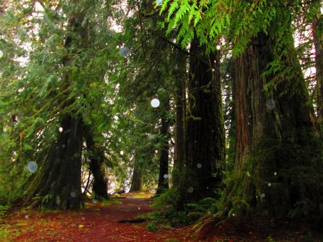 Forest in Washington