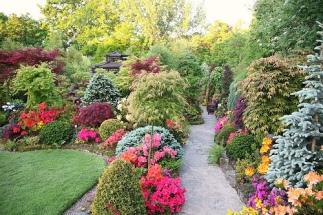 Garden foliage, pines