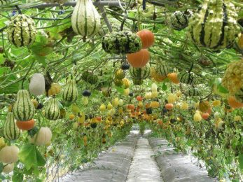 Gourd forest