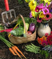 Harvest, food forest