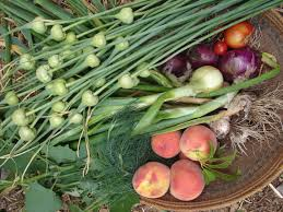 Harvest from food forest