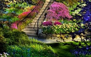 Stairs. foliage