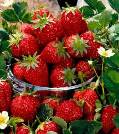 Strawberries, helps stop worries about weight