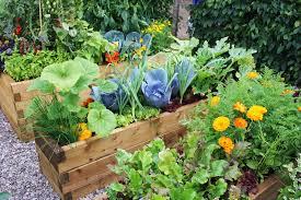 Wood planters for veggies