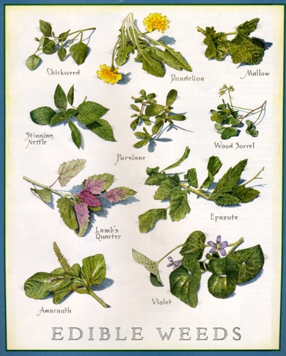 Weeds contribute special qualities because they are here to help out areas destroyed by man and Nature. Many of them are all edible and some have seeds that can be made into flour for baking.